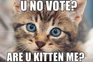 voting-kitten